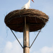 Stock Photo: Stork in its nest