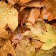 Autumn background — Stock Photo #1057971