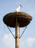 Stork in its nest — Stock Photo