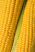 Two corns background — Stock Photo