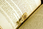 Dried flower used as a bookmark — Stock Photo