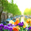 Stock Photo: Spring in Amsterdam