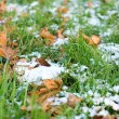 Stock Photo: First snow