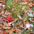 Stock Photo: Beginning of winter