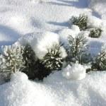 Frosty day — Stock Photo