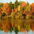 Bright autumn trees — Stock Photo
