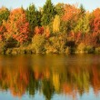 Bright autumn trees - Stok fotoraf