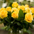 Royalty-Free Stock Photo: Bunch of beautiful yellow roses