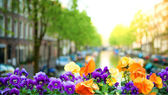 Spring in Amsterdam — Stock Photo