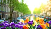 Spring in Amsterdam — Stock Photo