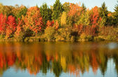 Bright autumn trees — Stockfoto