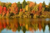 árboles de otoño brillantes — Foto de Stock