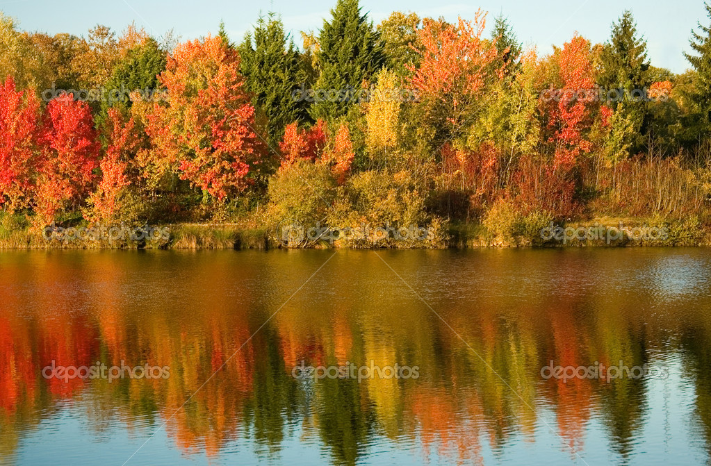 Bright autumn trees with their reflection in water  Foto de Stock   #1077667