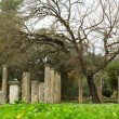ancient columns in archea olympia — Stock Photo