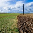 Royalty-Free Stock Photo: The field.