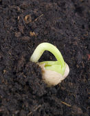 Germination plant. — Stock Photo