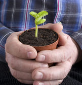 Plant in the hand. — Stock Photo