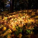 Paints of autumn — Stock Photo #1374087