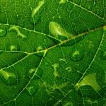 krople wody na liści roślin — Zdjęcie stockowe