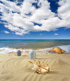 Landscape with seashell on sky — Stock Photo