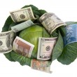 Money situated on green cabbage on white — Stock Photo #1461448