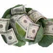 Money situated on green cabbage on white — Stock Photo #1461463