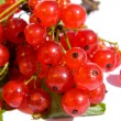 Currant isolated on a white - Stock Photo