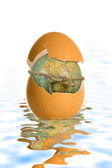 Shell egg and globe — Stock Photo