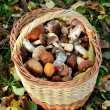 Royalty-Free Stock Photo: Basket with mushrooms