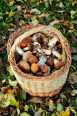 Basket with mushrooms — Stock Photo