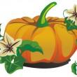 Vector pompoen voor halloween ontwerp — Stockvector