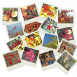Stack of autumnal polaroid photos - Stock Photo