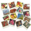 Stock Photo: Stack of autumnal polaroid photos