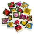 Flowers shots collage background — Stock Photo