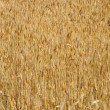 Royalty-Free Stock Photo: Wheat background