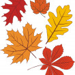 Royalty-Free Stock Vector Image: Collection of vector autumn leave shapes