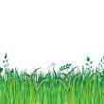 Постер, плакат: Green grassi vector illustration
