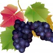 Cluster of grapes with leaves — Vector de stock