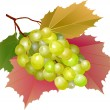 Stock Vector: Cluster of grapes with leaves
