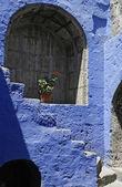 Bir mavi kemer çiçek — Stok fotoğraf