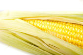 Corn — Stock Photo