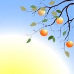 Branch of apple-tree — Stock Vector
