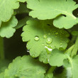 Water droplets on a fresh green leaf — Stock Photo