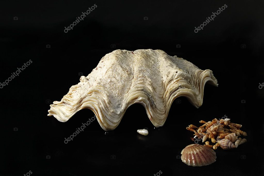 Shell and pearl — Stock Photo #1077429