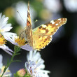Butterfly sits on beautiful flower — Stock Photo