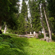 Alpine Wald — Stockfoto