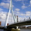 Erasmus Bridge in Rotterdam — Stock Photo #1062182