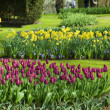 Stock Photo: Flower beds in the garden
