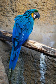 Colorful big parrot on branch — Stock Photo