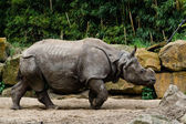 Rhino in zoo — Stock Photo